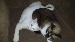 Hospedagem de gato em residência