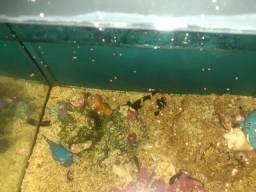 Vendo aquário de água salgada completo