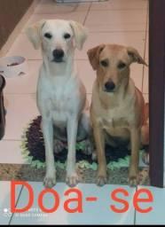 Doa- se 2 cachorras.