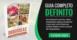Guia definitivo - Orquídeas para iniciantes