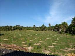 Fazenda de 300 Hectares - BR 230 ( sentido Humaitá - Lábrea) Km68