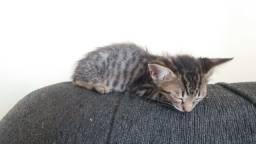 Doa se lindo gatinho