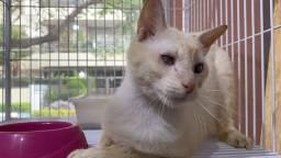Doação de Gato (Adulto Especial)