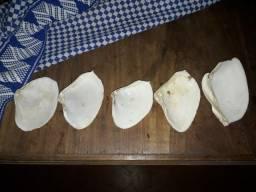 Belas conchas antigas