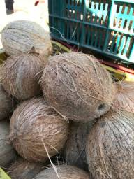 Vendo coco seco em quantidade