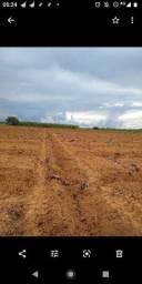 Roça de 45 hectares.
