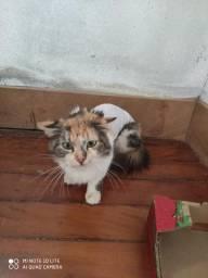 Adotem bela gatinha tricolor!