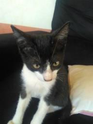Filhote de gato para doação