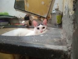 Vendo essa gata castrada não sai da rua