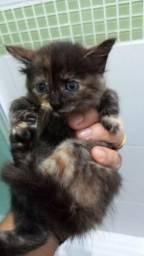 Gato para adoção