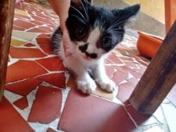 Filhote de gato fêmea 2 meses