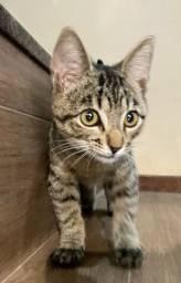 Doação de Gatos (Filhotes)