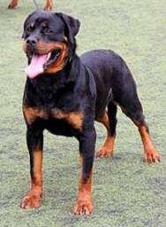 Quero adotar um cachorro