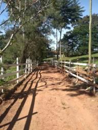 Título do anúncio: Excelente Fazenda em Onça do Pitangui - MG - 15 ha