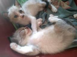 4 lindos gatos para doação