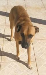 Cadela castrada para adoção responsável