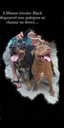 Vendas de cães