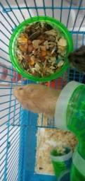 Vende se Hamster preço baixinho, pra vender rápido