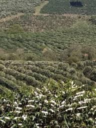 Fazenda de Café Carmo de Minas, MG