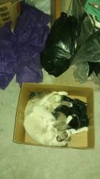 Gatos com 1 mês