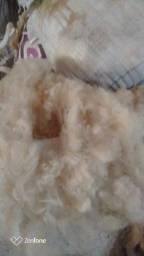 Lã de carneiro