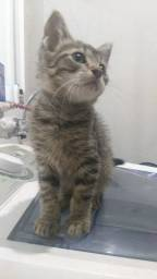 Gato disponível para adoção