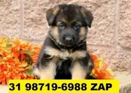 Canil Filhotes Cães Selecionados BH Pastor Dálmata Boxer Labrador Akita