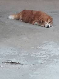 Cachorro para doação ...