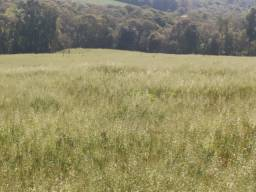 Fazenda em Antonio Olinto com 26,64 alqueires