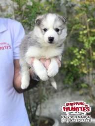 Husky Siberiano 11 clínicas e oferecemos suporte veterinário exclusivo em todo Brasil!
