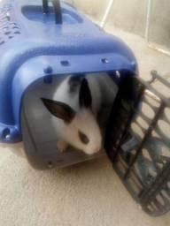 Vendo coelho com casinha pra carregar