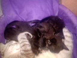 Gatinhos precisam de adoção responsável!!!