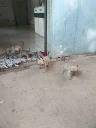 Estou doando estes cachorrinhos