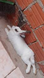 Uma coelha?