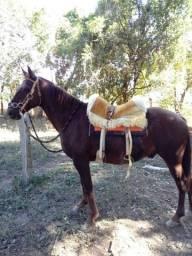 Vendo cavalo meio sangue quarto de milha R$2000 pra ir embora dispenso curiosos.