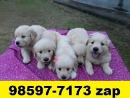 Canil Filhotes Cães Premium Top BH Golden Pastor Rottweiler Labrador Akita Boxer