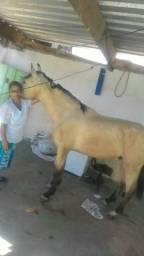 Vende a um cavalo ou troca