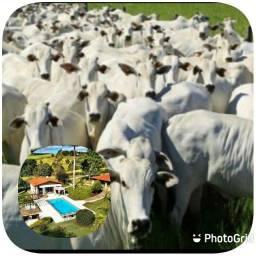 Vestimento em gado e sítio