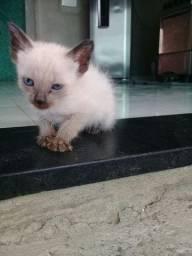 Doação filhote gatos femia