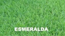 Vendas e plantil de grama