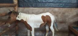 Potra Paint Horse