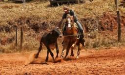 Cavalo quarto de milha PO  laço pé
