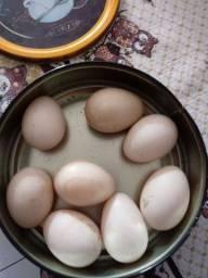 Ovos de pata galados.