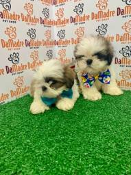 Filhotes de Shih Tzu é no Da Madre Pet Shop