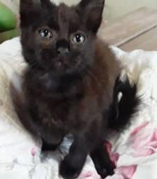 Doa-se filhotes de gatos