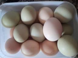 Ovos caipiras galados  por galo Ameraucana