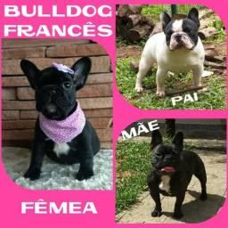 Fêmea de Bulldog Francês Linhagem Importada c/ Pedigre * Microchipe * Parcelado 12X