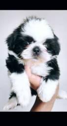 Não há nenhum psiquiatra no mundo como um cachorro lambendo o seu rosto