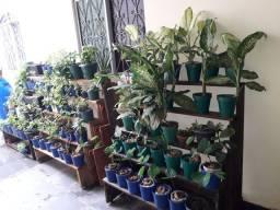 Expositor jardineira