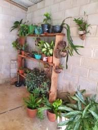 Plantas de várias espécies